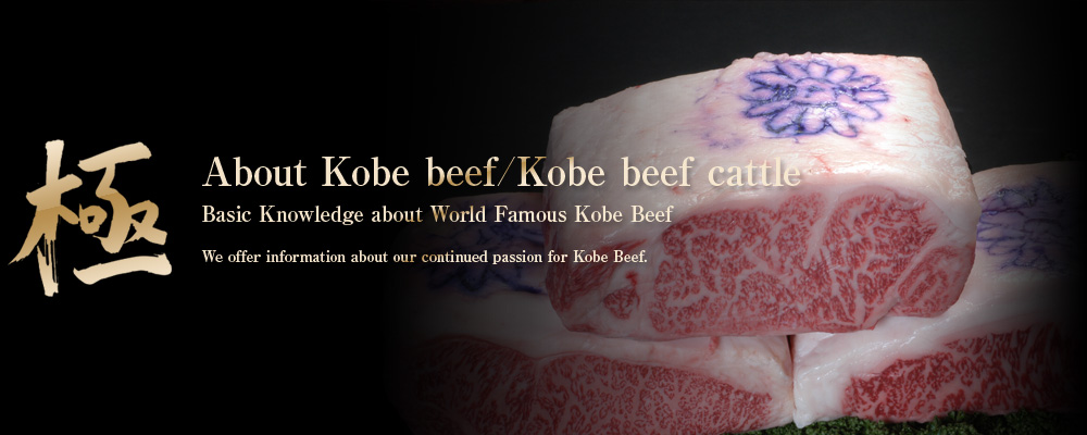 極 About Kobe beef/Kobe beef cattle Basic Knowledge about World Famous Kobe Beef